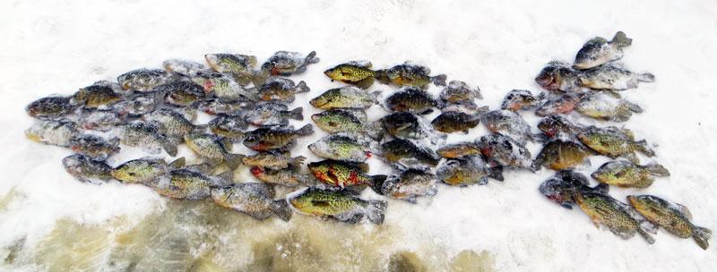 ice fishing panfish crappies and sunfish