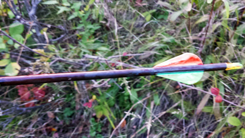bloody arrow bowhunting whitetail deer