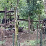 The bear enclosure at Kuang Si waterfalls (Luang Prubang, Laos)