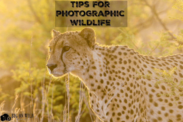 Tips for Photographing Wildlife