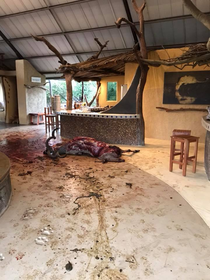 Hyena Kill at Luxury Camp Reception