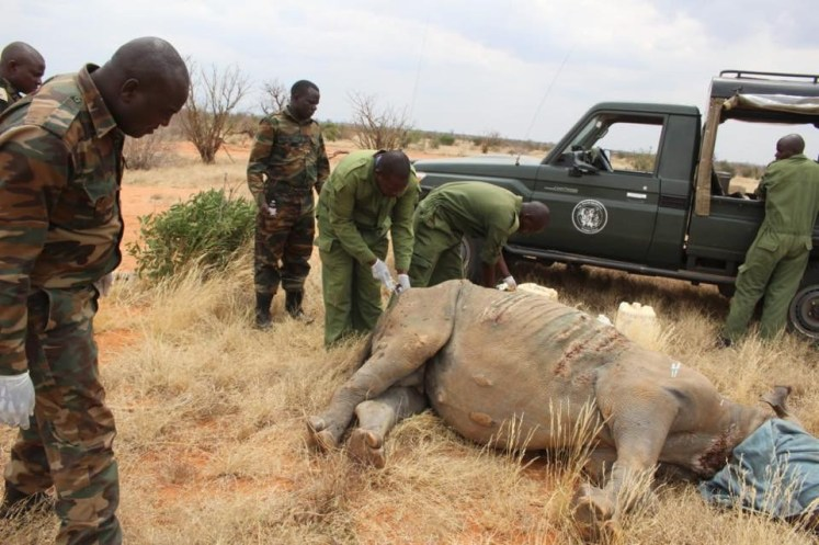 Kenya Wildlife Service staff loads a black rhino into a transport crate in June in Nairobi National Park