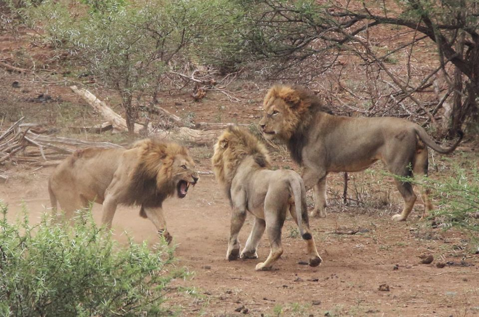 The Mazithi Males Defend Their Territory