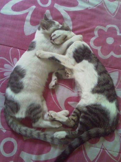 Kitteh_Cat_Love_3_by_ZaLiTHkA