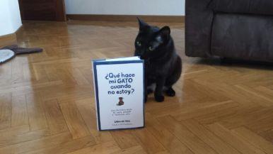 Qué hace mi gato cuando no estoy - 2