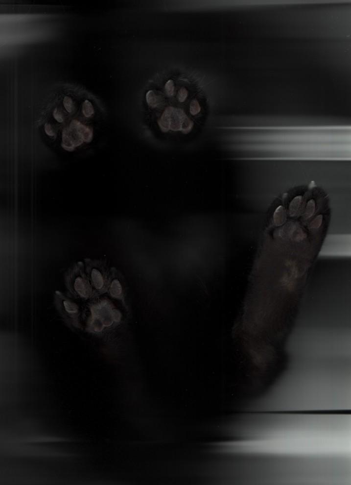 1908 717x990 Отсканированные кошки