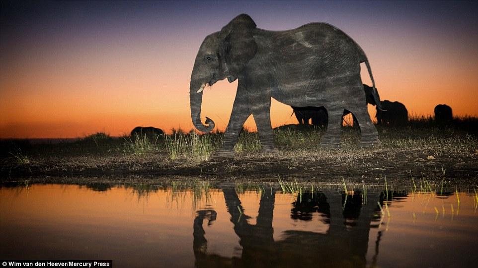 Царство животных, каким вы его еще не видели: гонки, драки и нежность