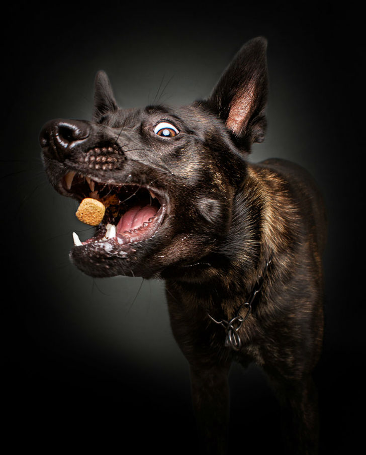 Фотограф запечатлел всю гамму забавных эмоций у собак