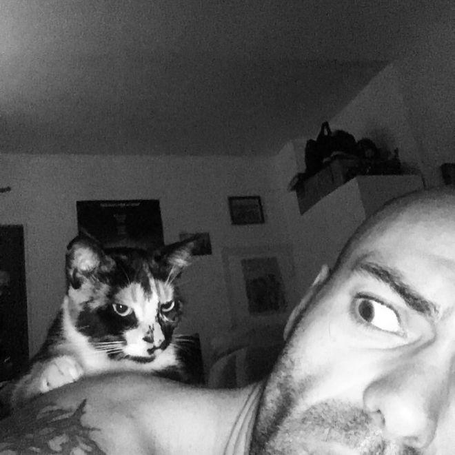 25 кошек, которым надоело быть милыми и они перешли на темную сторону