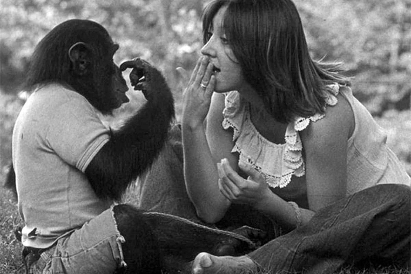 Чем закончились попытки ученых научить приматов разговаривать обезьян, научить, Сарой, Премака, обезьяны, случае, нужно, ученые, выучить, ученый, писал, время, эксперимента, процессе, добиться, удалось, набора, помощи, совершенно, языка