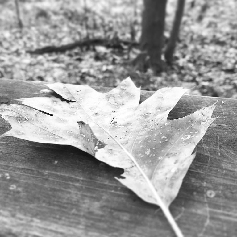 Fall (in) Love