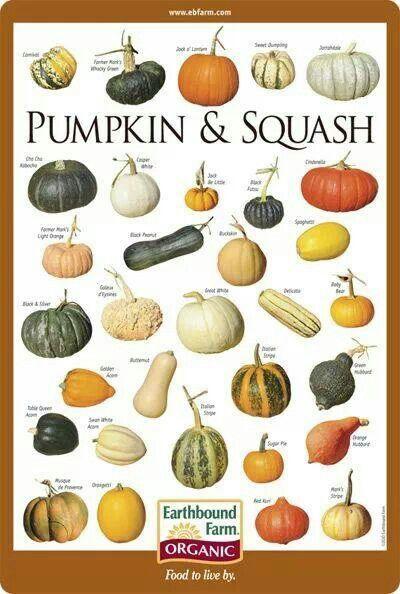 types-of-squash