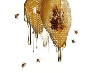 Honeycomb-1286415256
