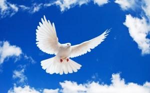 bird-white-flying-dove-hd-240360