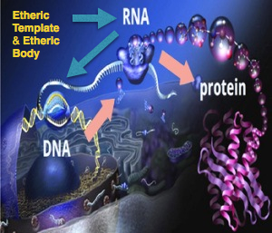 SpiritualRNA:DNA
