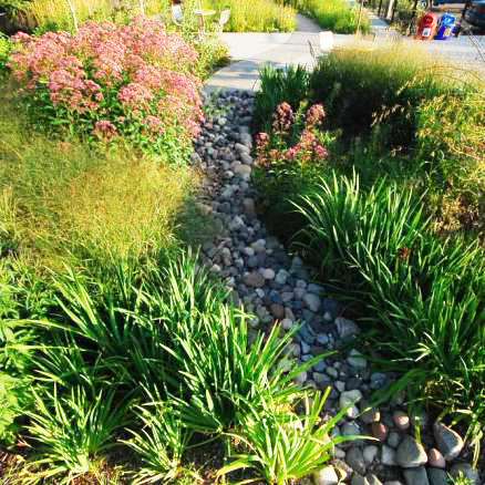 A stone path through a native plant garden with grasses and pink flowers.