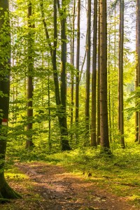 path trees