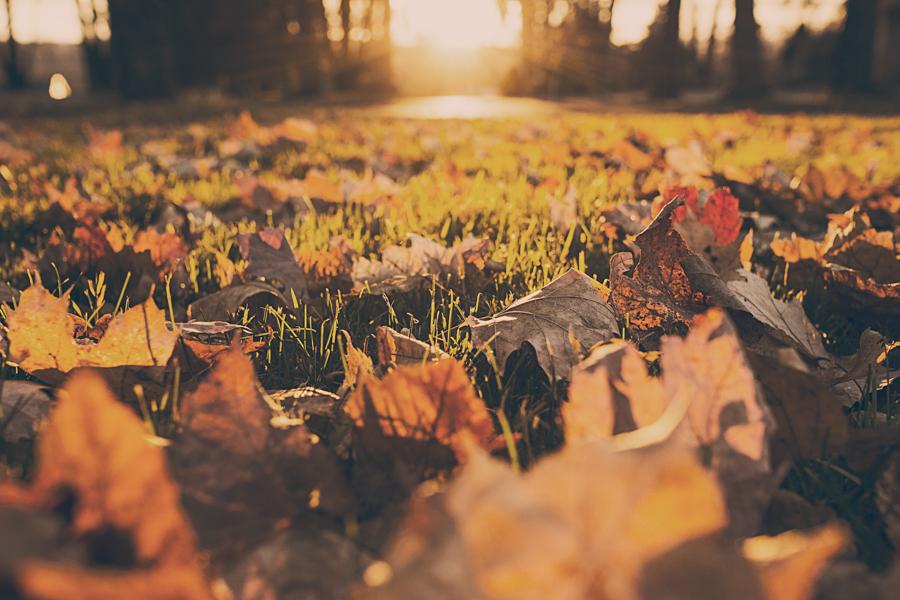 Falling back into Autumn