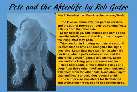 postcard-front PetsAfterlife#4REVsmall