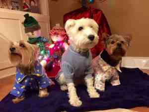 Puppies in pajamas, Big Séance.com