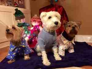 Puppies in pajamas, Big Séance.com