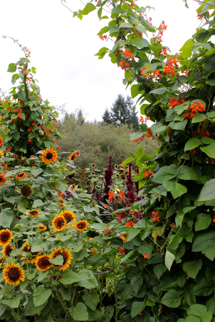 Flowers at The Good Earth Farm, Gabriola Island