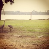 Empty cross with sand cranes. Ashley took this photo at the Florida Christian Writer's Conference in 2015.