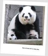 Mama Panda with Baby Bear (Photo by Ashley Jones from Atlanta Zoo)