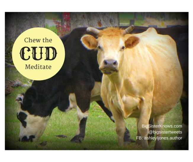 cows_chewcud_info