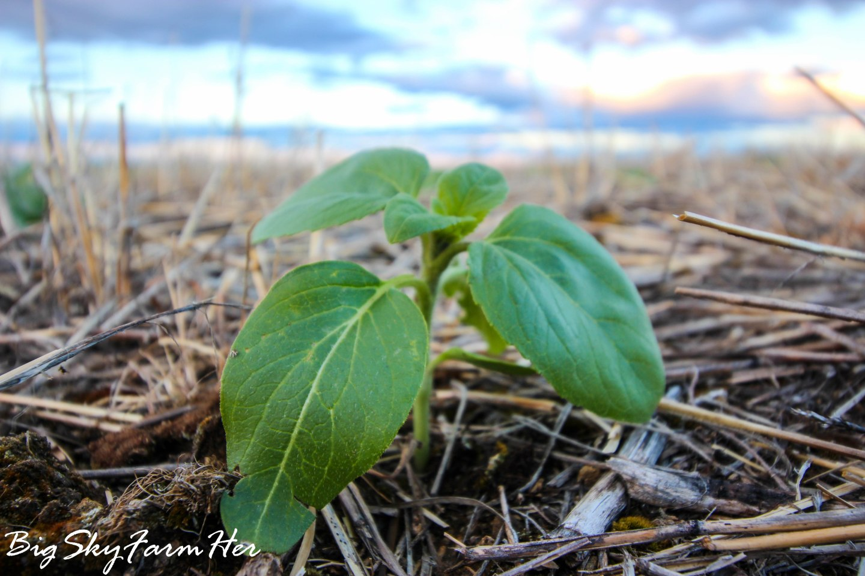 When do we start seeding?