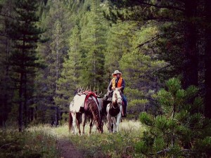 Fall Horse Leasing - Big Sky Horse Leasing