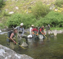 Interns conducting electroshocking for fish population monitoring for the Teton River Tributary Yellowstone Cutthroat Trout population study.