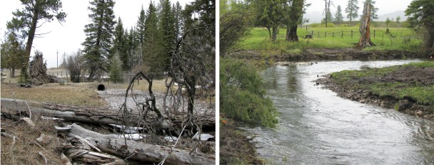 Restoration of Lincoln Spring Creek in Montana by narrowing and deepening channel, increasing stream sinuosity, installing high energy riffles to increase secondary productivity and ensure sediment transport mechanisms to eliminate deposition of fine sediment.