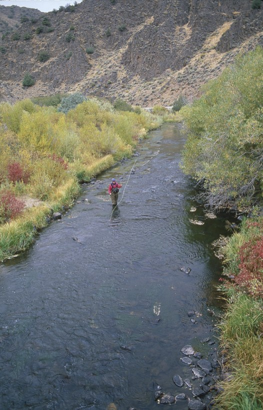 The upper Owyhee River — along with its sister streams; the Bruneau and Jarbidge — rises in the isolated mountains and canyons of northern Nevada. All three watersheds hold redband trout; the Jarbidge even shelters the southernmost population of bull trout.