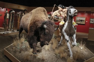 Bison-Exhibition-Great-Falls_web.jpg