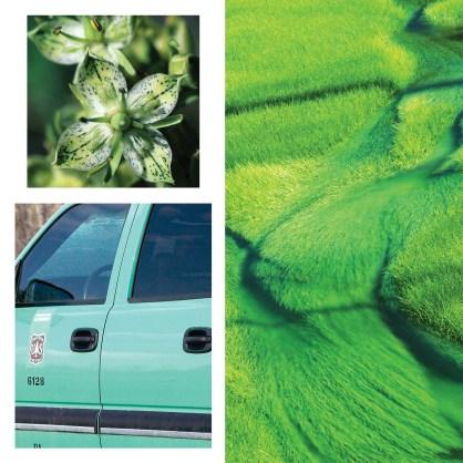SPSU09_-Uniting-colors-green_web.jpg