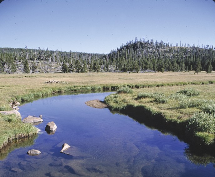 Limestone and trout are a natural combination: Due to higher productivity and special regulations, the upper North Tongue supports cutthroats that can push 20 inches, with plenty of public access.