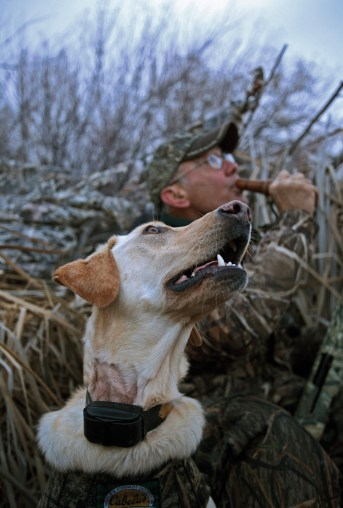 """All """"eyes to the sky"""" as duck hunter Bob Frey and his yellow lab, Maggie, intently follow ducks circling overhead."""
