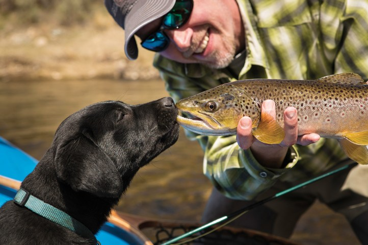 """David Thompson, owner of Brickhouse Creative in Bozeman, was fishing with his four-month-old Lab Jasper on the Smith River when Thompson's friend, Justin, shot the image below. """"I've had at least one guide friend tell me that Jasper's the best boat dog he's ever fished with,"""" Thompson said. """"He's just a pretty chill individual. Happy to hang out, doesn't try to chase the fish. The downside is that he would always like to sit on your lap."""" Photo by David A. Thompson"""