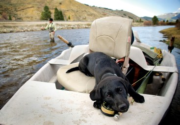 David Thompson's black Lab, Jasper. Photo by David A. Thompson