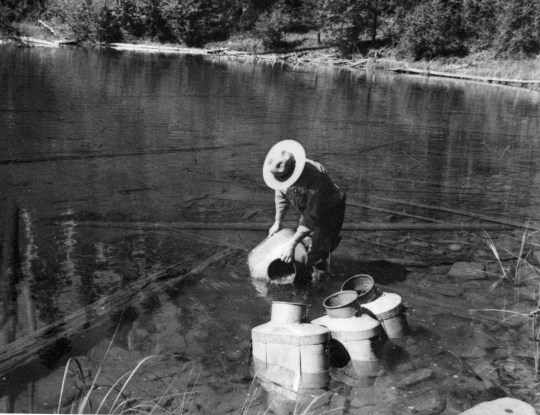 An unidentified ranger emptying cans of fish at the foot of Lake McDonald, (September 1943). | Photo Courtesy of Glacier National Park archives