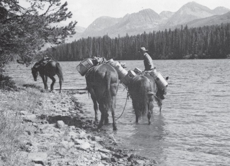Ranger and mules, loaded with fish cans, at the foot of Logging Lake, (September 1943). | Photo Courtesy of Glacier National Park archives