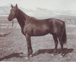 """Ogden was bred at Aperfield Court, a second horse farm in County Kent, England, where Daly diligently gathered Europe's choicest racing stock. After Ogden won the prestigious 1896 Futurity Stakes, turf reporters referred to imported and unknown Ogden as the """"horse of mystery,"""" and his jockey, Doc Tuberville, """"boy of mystery."""" Ogden won 15 of 28 races, placed second eight times and placed third once, raking in about $160,000. He went on to a successful career as a sire."""