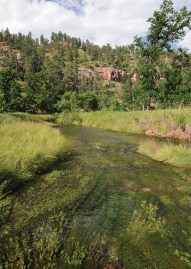 Located on the western fringe of the Black Hills, Sand Creek is one of the most productive spring creeks in the Cowboy State, packed with exuberant aquatic life.