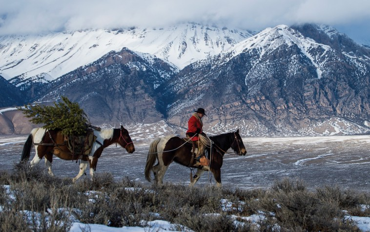 Kurtis Koeppen leads a Christmas tree-laden horse during the workshop's sunset shoot.