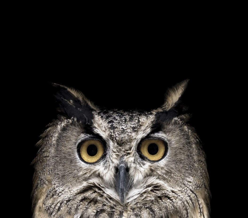 night-owl_web.jpg