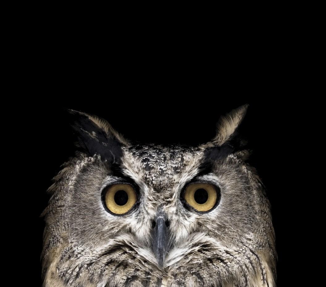 night-owl_web.jpg