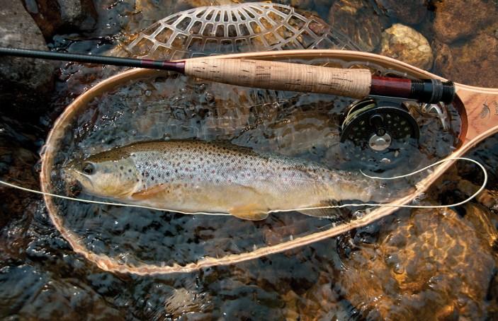 Springs and calcium carbonate-rich limestone produce excellent conditions for abundant brown (pictured) and rainbow trout, with brookies in the headwaters.