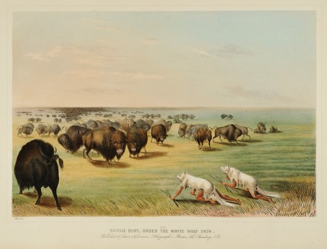 """Buffalo Hunt Under the White Wolf Skin"" 