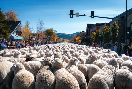 A woolly herd en route to greener pastures during the 2013 Trailing of the Sheep Festival.